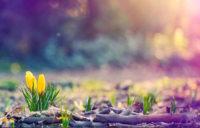 Шри Пракаш Джи о духовном развитии: активно развивайтесь, чтобы в вашей жизни были постоянные улучшения.