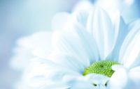 Настоящая духовность - Шри Пракаш Джи