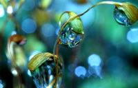 Могут ли материальные блага помешать духовному развитию - Шри Пракаш Джи
